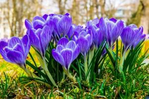 březen jaro zahrada