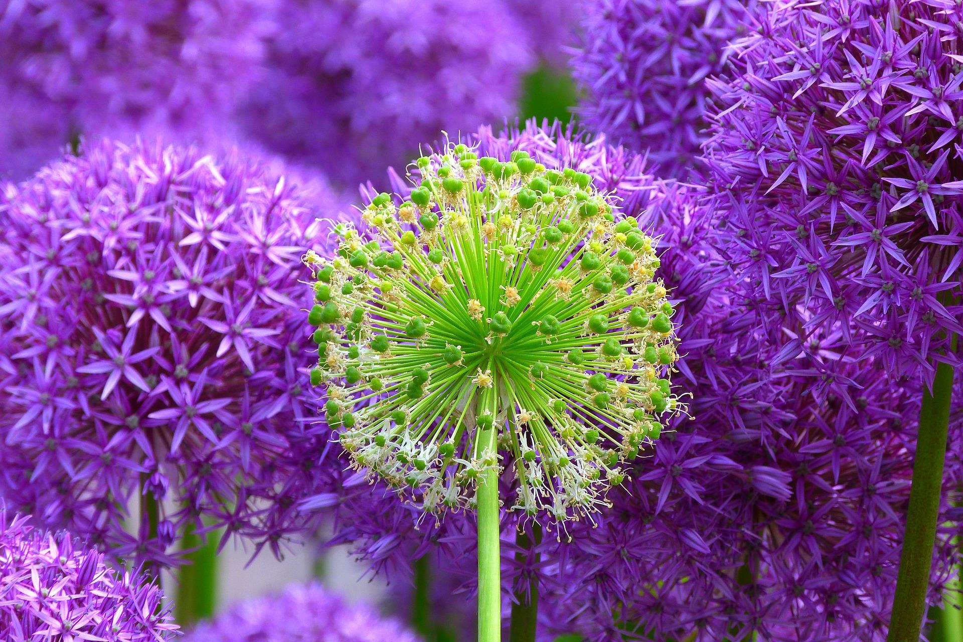 nádherné fialové a zelené květiny